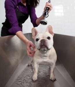 dog-getting-bath